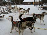 Hundliv i Lapinkylä