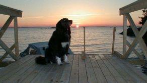 Augustikväll på bryggan vid sommarstugan. Här var han hemma. Han ägde nog stället. År 2000.