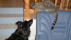 Extra spännande med kattbesök. Året är 2000.