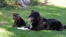 Kul med hundbesök. Figo hälsar på sommaren 2003.