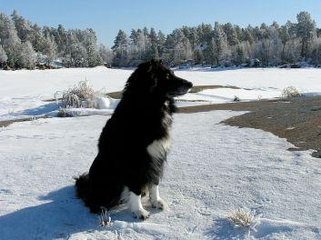 Vilostund i Maxmo efter en tur på isen med start i Österhankmo. Året är 2004.