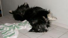 Typisk liggställning för Igor. Från 2008. Han var nog lite skruvad hela Igor.