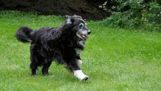 Att springa runt på gräsmattan var ju så roligt. Året är 2009.