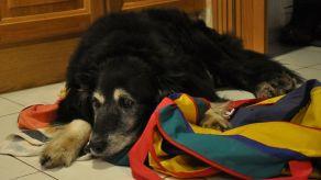 Igor med sin väska. Den flyttade han och trixade med mest varje kväll.