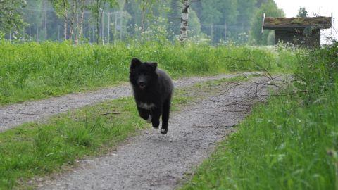 Ivar på skogspromenad, - i högt tempo.