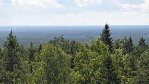 Från utsiktstornet på Lauhanvuori ser man skog vart än man ser.