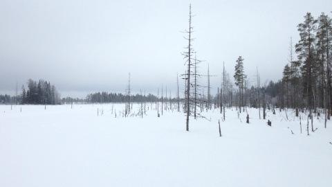 Mycket snö och speciell natur vid Niinistönjärvi.