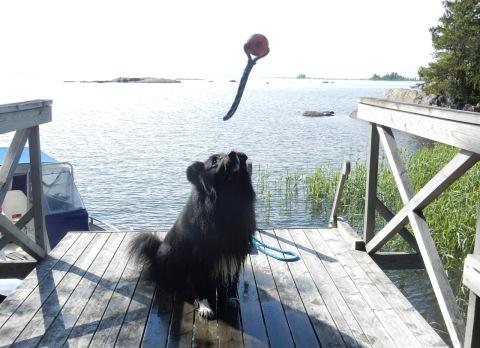 Ivar gillar bollar.