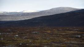 I gränstrakterna mellan Norge och Finland