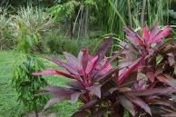 Färger på Roatan, Honduras.