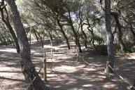 Mallorca03160619